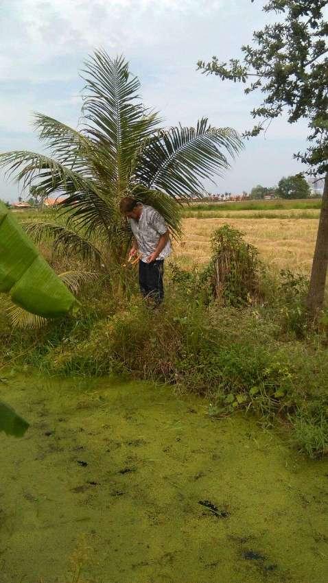1 rai of farm land between Hua Hin and Cha am Nice quit area