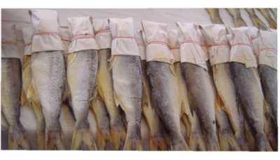 ขายปลากุเลาเค็ม ของแท้จากดอนสัก จ.สุราษฎร์ธานี