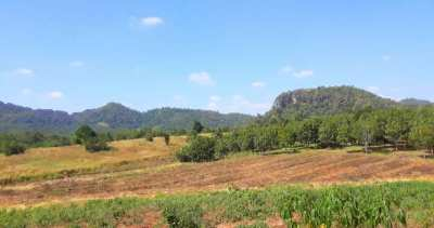 Thailand - we rent a part of our organic Mangofarm