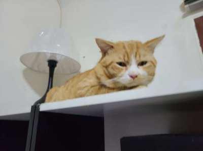 Mr. Cat Needs Loving Home!