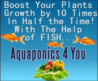 Aquaponics 4 You™
