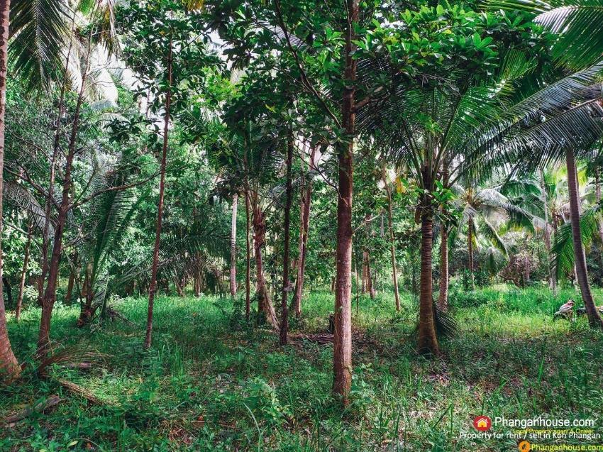 LAND FOR RENT 6,000 BAHT PER RAI, KOH PHANGAN