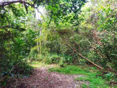 Land for sale in Koh Phangan