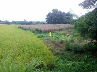 8 Rai Land in province NAN
