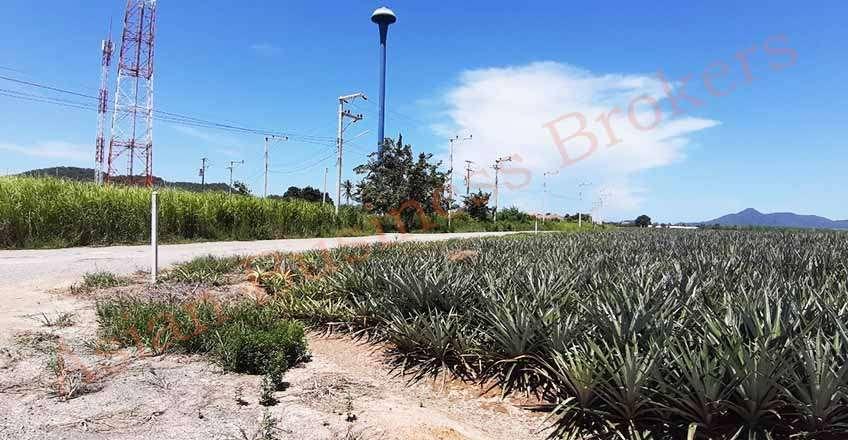 5007046 Freehold 10 Rai Land for sale in Thap Tai, Hua Hin