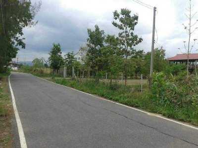 ขายบ้านเดี่ยว 3 ไร่ ติดถนนดำ ใกล้ถนน สันกำแพง-แม่ออน ( 1317 ) เพียง 1