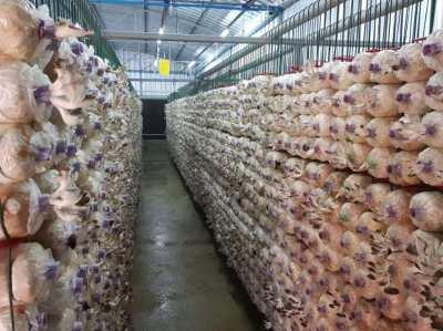 Mushroom Farm for Rent