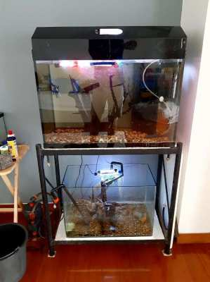 Fish Tank - 140 liter, plus stand and accessories