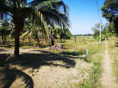New price for these 7 land plots - now 995,000 THB each!