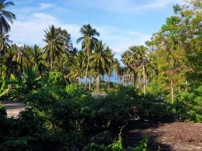 SEA VIEW LAND IN A 400 METERS TO THE BEACH FOR SALE. CHAWENG NOI.