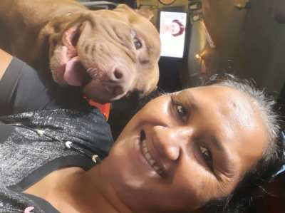 Red nose pitbull for free
