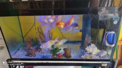 140L Aqurium with life for sale