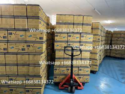 V glove brand powder free nitrile examination gloves 420,000 boxes