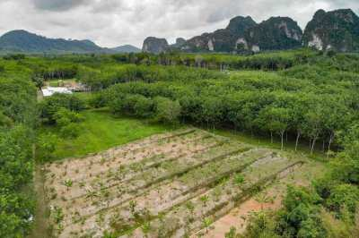 1 Rai Land for Sale in Secluded Spot away from Traffic