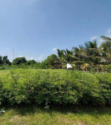 Songkhla land for sale ขายที่ดิน 100 ตร.วา ถนนสงขลา-นาทวี ซอย32