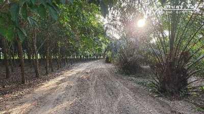#1296 Chon Buri Rayong Borders   14-2-55