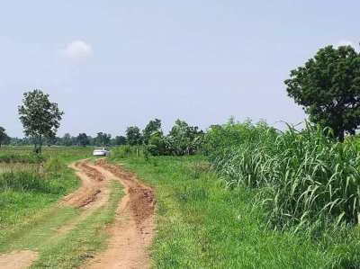 Land for sale in Non Sung District, Nakhon Ratchasima (Owners Post)