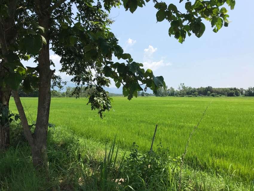 9+ Rai Land For Sale In Phaya Mengrai Chiang Rai 57290