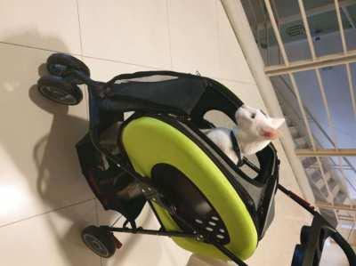 Ibiyaya multifunctional 5 in 1 pet carrier