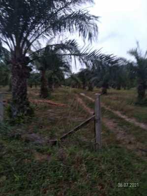 Private Sale 2 X 49 Rai Chanot Land in Prachuap Khiri Khan -