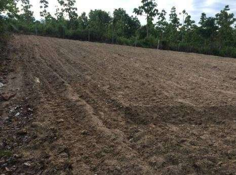 Land for sale in Thung Yao Subdistrict (11 Rai) Owners Post