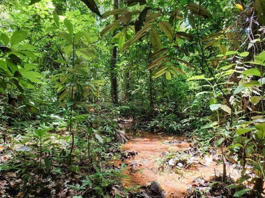 Koh Phangan Land for rent