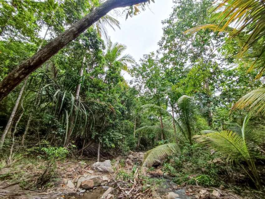 Land for sale in Koh Phangan with a quiet stream
