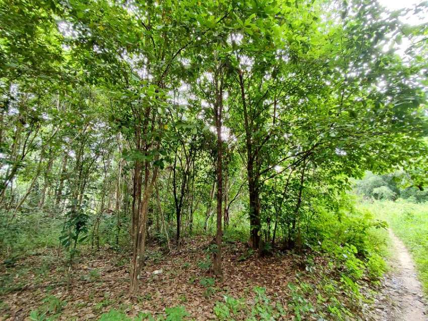 Land for sale on Koh Phangan
