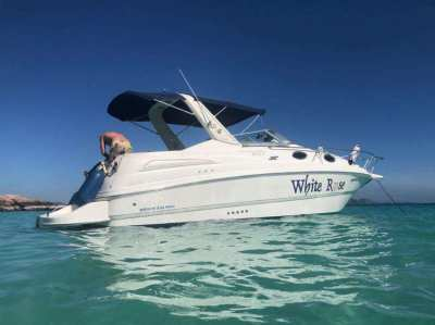 Reduced Save $$$$$$ -ABSOLUTELY PERFECT CONDITION, - MUSTANG 29
