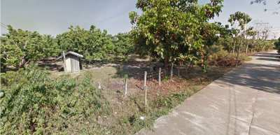 Land for sale with longan garden San Pa Tong District