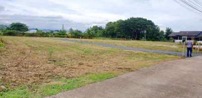 Land for sale in Mae Rim District.